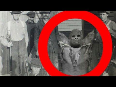Real Bigfoot Sasquatch X 2 Captured Amp Killed
