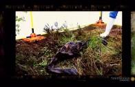 Mummies Alive CA 2015 ~ Buried in a Bog