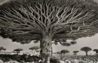 There are ancient trees on our planet that are thousands and thousands of years old